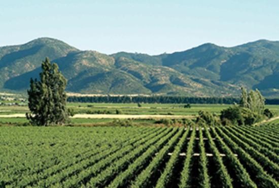 De wijngaarden van Los Vascos